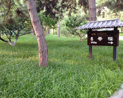钓鱼台国宾馆苔草栽植