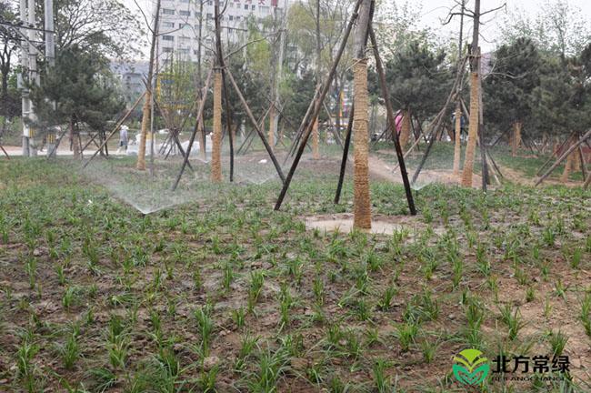 绿化工程风采展示(四)